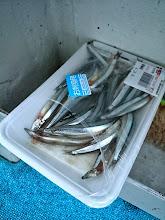 """Photo: 青物、食いがシブくなってます。 キビナを使って根魚を狙いますか!""""モリスギさん""""!"""