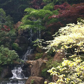Japanese Gardens Portland, Oregon by Margaret Whitesides - Landscapes Waterscapes
