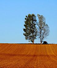 Photo: double tree  #fotoamateur // +Fotoamateur #landscapephotography // +Landscape Photography #hqsplandscape // +HQSP Landscape #Trees  #Nature  #SimpleNature