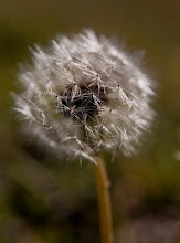 Photo: To be a wish