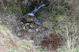 Photo: Stream. I wonder if it's still there in the summer?