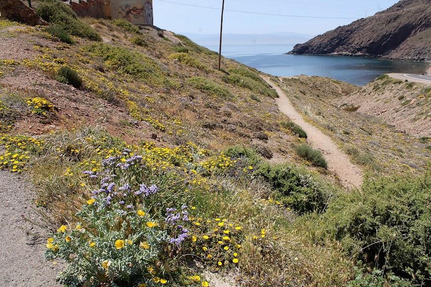 Paisaje floral en el faro del Cabo de Gata.