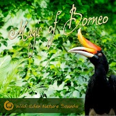 Magic of Borneo (Tropical Soundscapes from Kalimantan's Primary Rainforests)