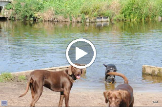 Video: Hitland hondenstrandje.