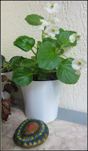 Photo: Begonia de Gheata  din balcon - 2017.05.25