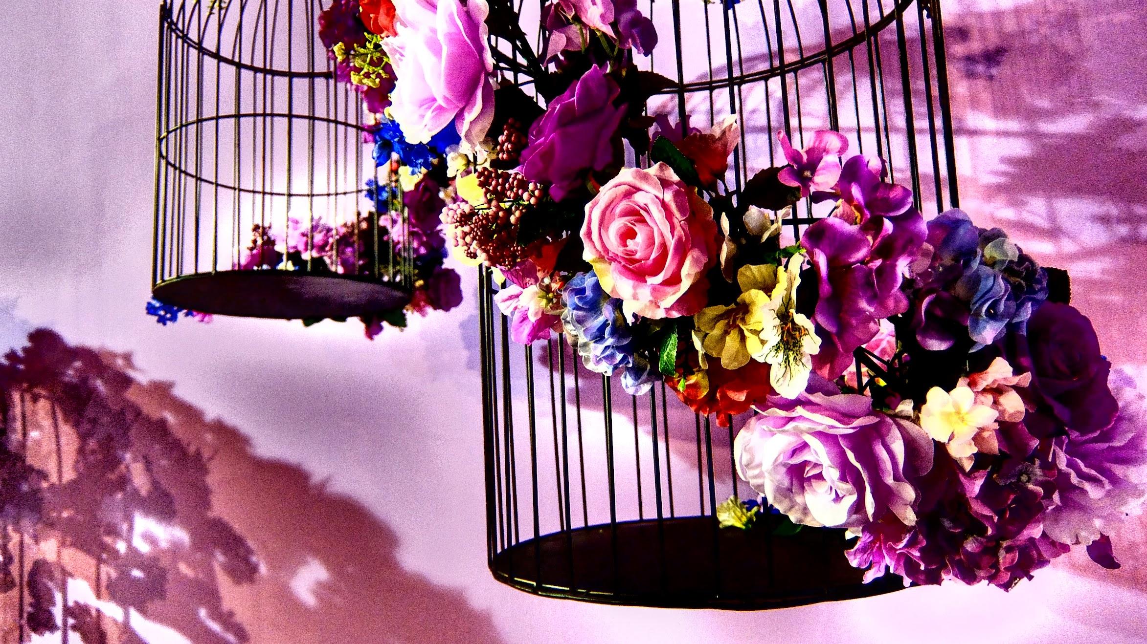 有許多乾燥花/鳥籠的裝置藝術