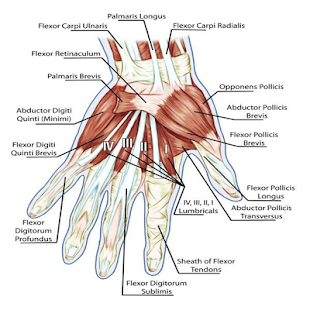 Acupressure Hand Point for Cure Diseases - náhled