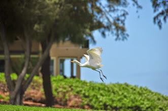 Photo: A bird takes flight.