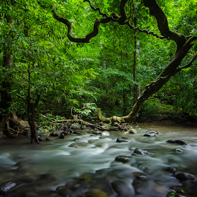 The River by Amril Nuryan - Landscapes Forests ( water, tree, waterscape, speed, green, forest, slow, river )