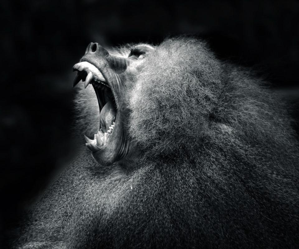 Monkey Wallpaper angry monkey wallpaper 4k - android apps on google play