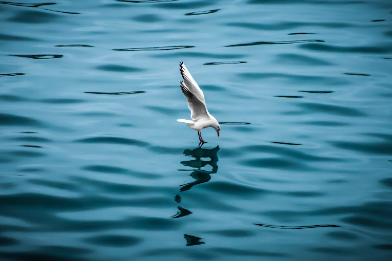 Fishing di Mario Quaglia