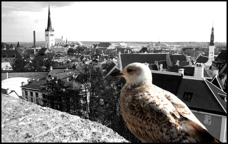 Il guardiano di Tallinn di giuseppe46