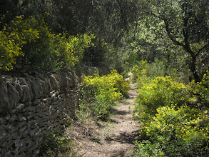 Photo: After the hamlet, our path runs through flower-filled forest ...