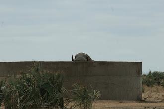 Photo: Kruger National Park. Praktisch wenn man groß ist.
