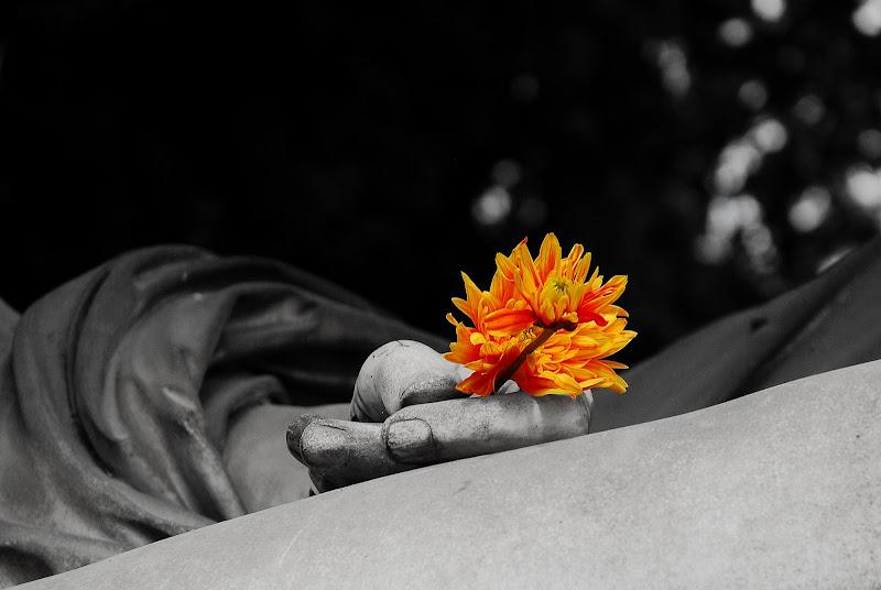 fiori di renataco58