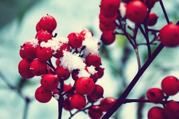 Neve, insegnami tu come cadere. di micphotography