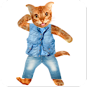 Funny Talking Cat icon