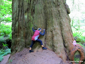 Photo: (Year 2) Day 360 - Dee the Tree Hugger and Pippa at the Bottom of a Redwood