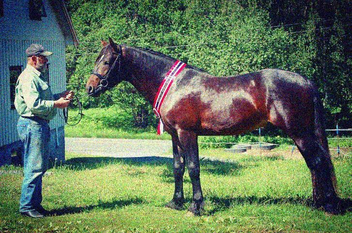 Et bilde som inneholder gress, hest, utendørs, ståendeAutomatisk generert beskrivelse