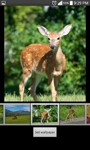 Deer  HD Wallpapers 1.2 screenshots 5