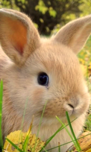 Cute Rabbit Wallpapers screenshot 0
