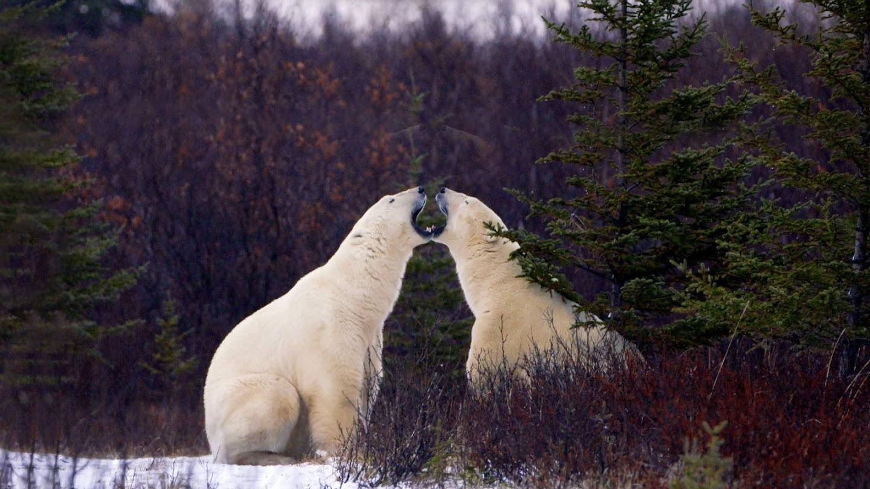 Watch Arctic Secrets live