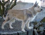 Photo: 2004 Rocco du Domaine de Saint Paul - Prod & Prop M. Mme Harnist (Quawa des Wassinières x Ottillia de l'Impasse des Vergers) Pedigree: http://www.pawpeds.com/db/?a=p&id=413145&g=4&p=bpi