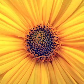 A Heart of a flower by Michael Krivoshey - Flowers Single Flower ( orange, red, heart, beautiful, yellow, flower,  )