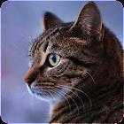Разговорный реальный кот icon
