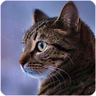 Talking Reality Cat icon