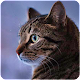 Talking Reality Cat icon