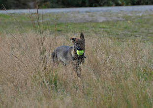 Photo: Bob har funnet ballen