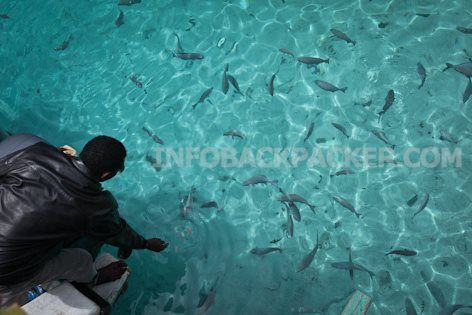 Photo: feed the fishes