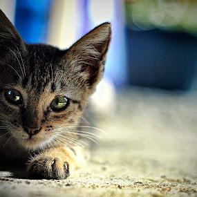 ninja moves by Rajha Tahir - Animals - Cats Portraits
