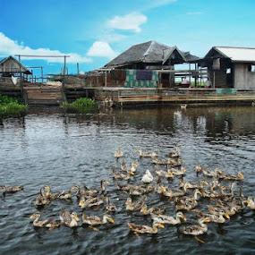 Duck & House by Ikhsan Effendi - City,  Street & Park  Vistas