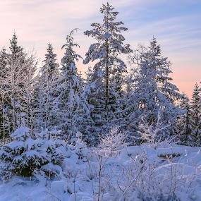 Stendafjellet by Espen Rune Grimseid - Landscapes Forests ( canon, bergen, winter, nature, stendafjellet, snow, forest, landscape, light, fana, norway )