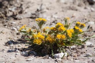 Photo: Fauna in Central Kalahari NP