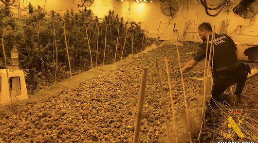 Balance de 2020 de la Guardia Civil: 159 detenidos por cultivar marihuana