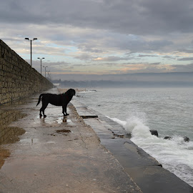 by Galq Fo-teva - Animals - Dogs Portraits