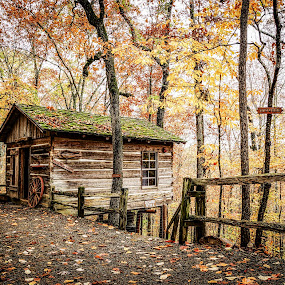 Arkansas Cabin in the Fall by Evan Jones - Buildings & Architecture Public & Historical ( cabin, fall colors, path, trees, pretty,  )