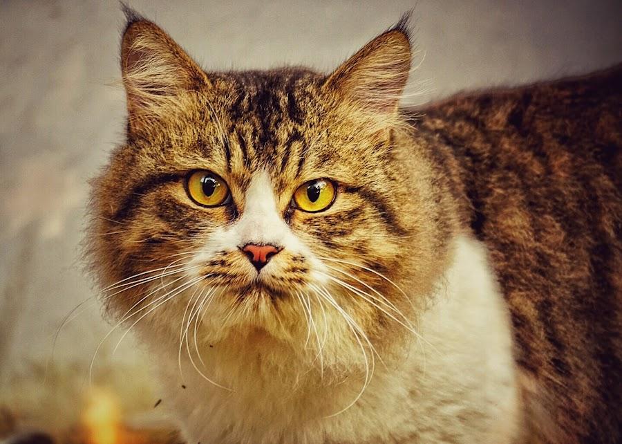 by Slamet Mardiyono - Animals - Cats Portraits