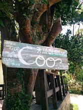 Photo: 大きな木が目印。