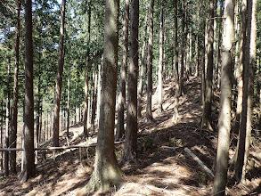 左から林道