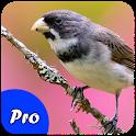 Coleiro Encarte Pro icon