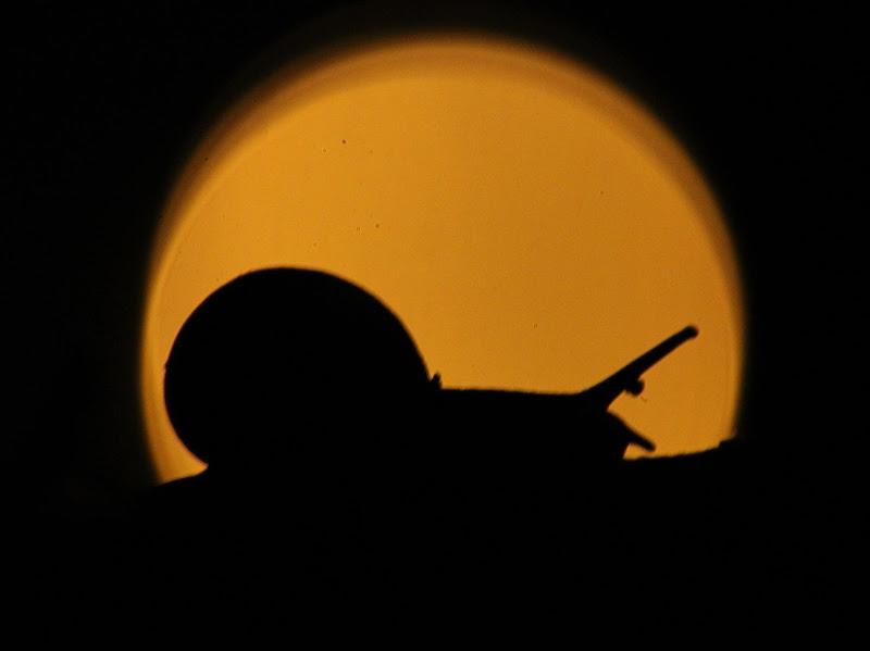 Nella notte un ombra. di Federica Patalano