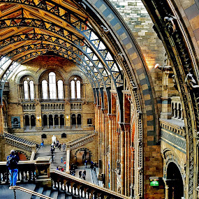 Natural History Museum by Alka Smile - Buildings & Architecture Public & Historical (  )