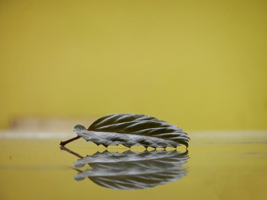 by Lokesh Bhoyar - Nature Up Close Leaves & Grasses