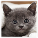 Kitten Live Wallpapers icon