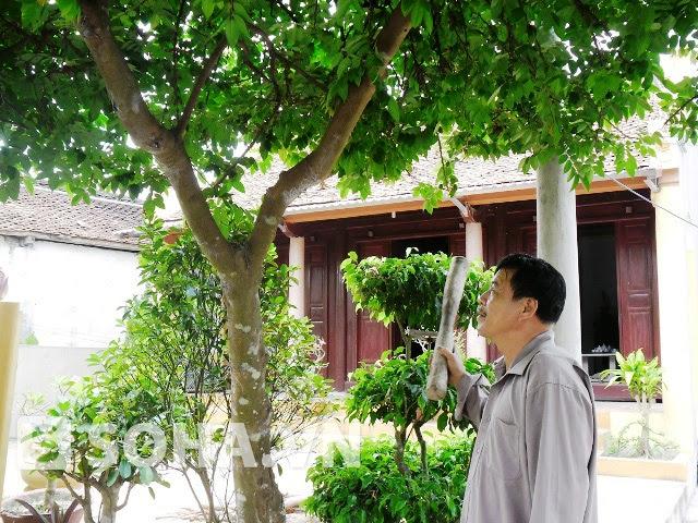 """Tết Mùng Năm: """"Khảo cây lấy quả"""" – một tục lệ độc đáo của người Việt"""