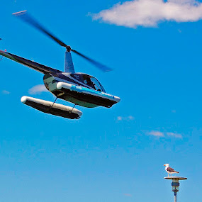 Birds by Tony Buckley - Transportation Helicopters